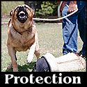 protection training
