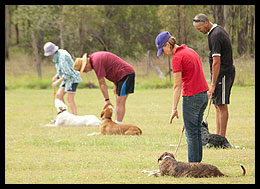obedience training classes Ipswich