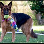 Dog News Online