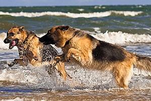 Off leash dog beach – Red Beach, Bribie Island