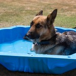 10 tips to avoid pet heat stress