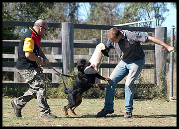 Personal Protection Dog Training at Aylwards.